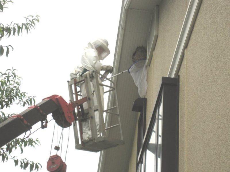 軒下のハチの巣撤去作業